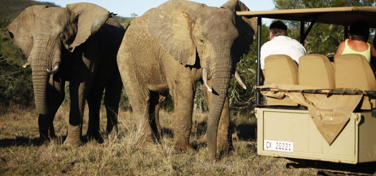 elephant-big5